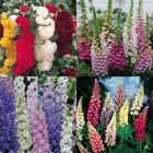 24 Cottage Garden Perennial Collection