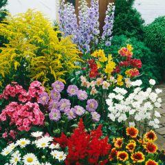 12 Medium/Tall Perennial Collection