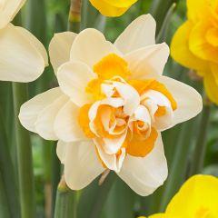 Narcissi Peach Cobbler