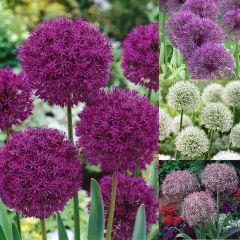 60 Allium Collection
