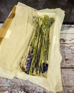 Dried Letterbox Flowers in Blue
