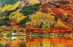 Autumn Colours in The Highlands