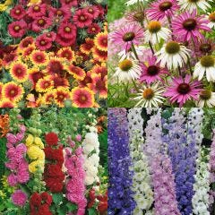 24 Bee Friendly Perennial Collection