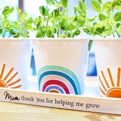 Personalised Rainbow Indoor Herb Planter