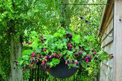 Rubus Cascade