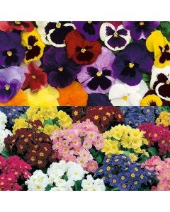 Pansy/Polyanthus Collection