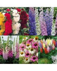 30 Cottage Garden Perennials