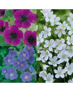 9 Geranium Collection