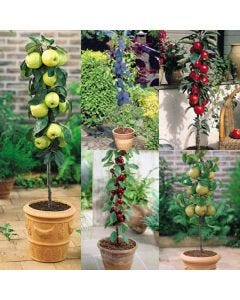 5 Miniature Fruit Tree Collection