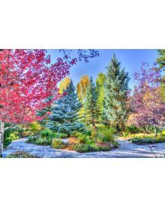 Colourful Trees Jigsaw