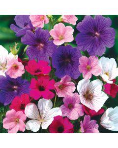 Hardy Geraniums Mixed