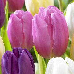 10 Tulip Pink Flag