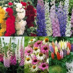 30 Cottage Garden Perennials