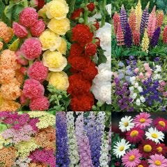 30 Cottage Garden Plants Collection