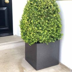Light Concrete Square Box Planter