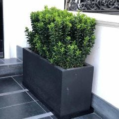 Light Concrete Trough Planter