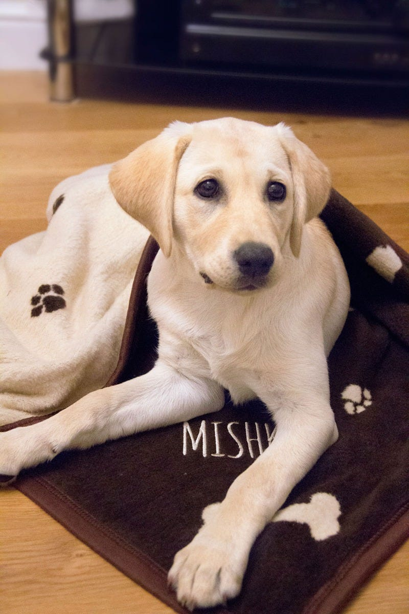 Image of Personalised Dog Blanket