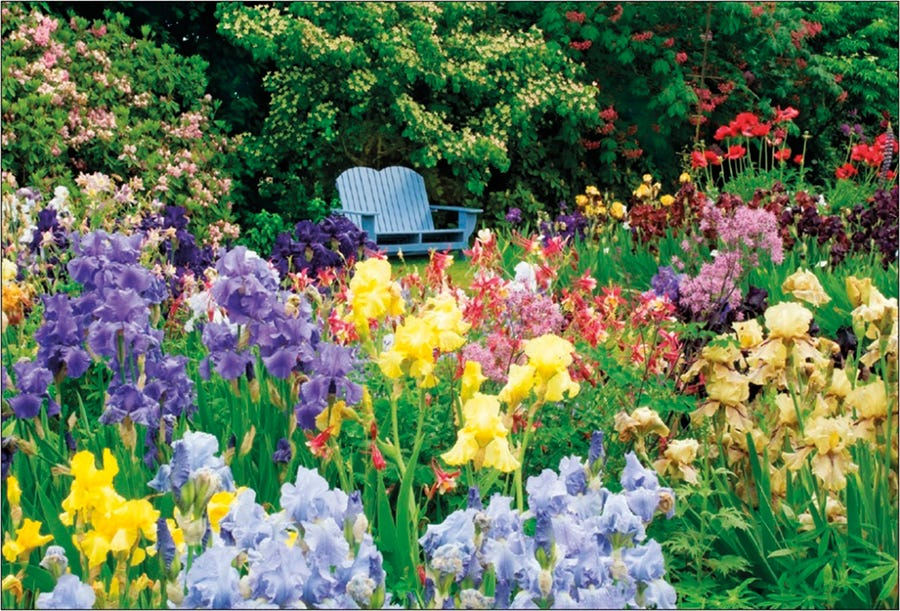 Image of Colourful Iris Garden Jigsaw Puzzle