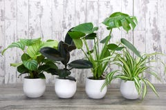 Urban Jungle House Plant Collection
