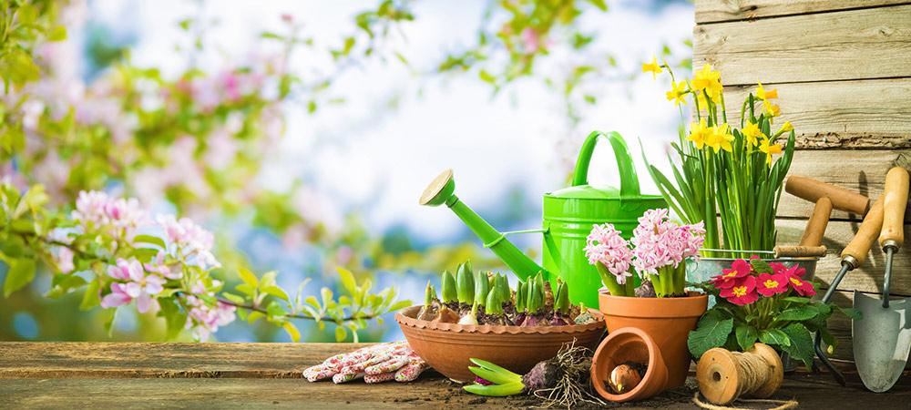 spring gardening advice