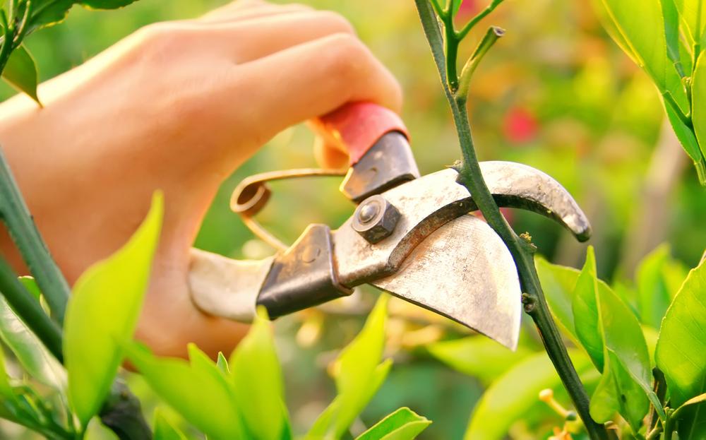 Gardening jobs