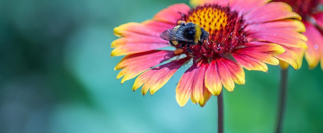 Top Gardening Jobs for May