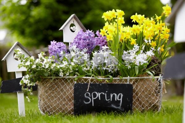 March Gardening Tasks